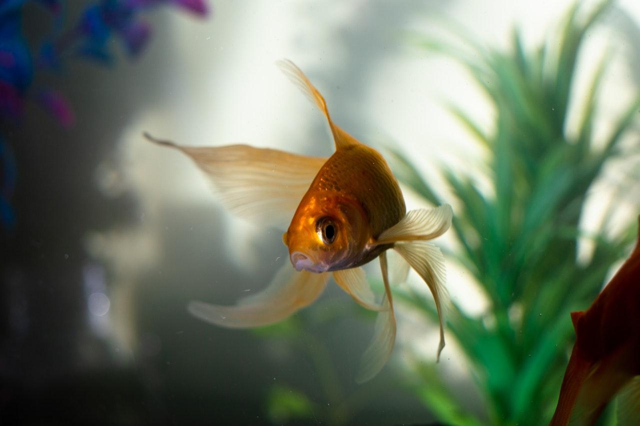 animal-aquarium-aquatic-2053815
